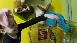 Попугай ара шкодит