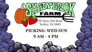 Shady Brook Farm Ad: Pick Your Own Blueberries