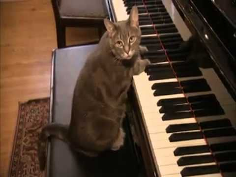 Piano Playing Cat : Top 10 Most Talented Pets