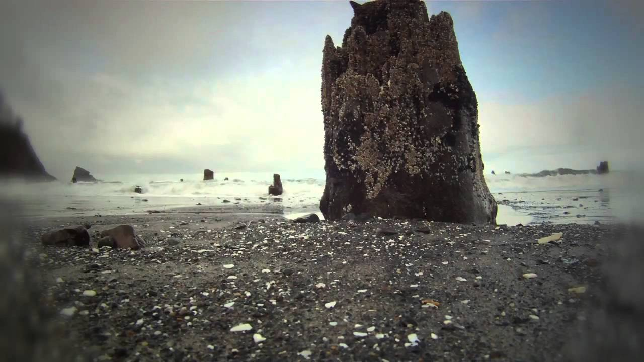Neskowin Ghost Forest - YouTub...