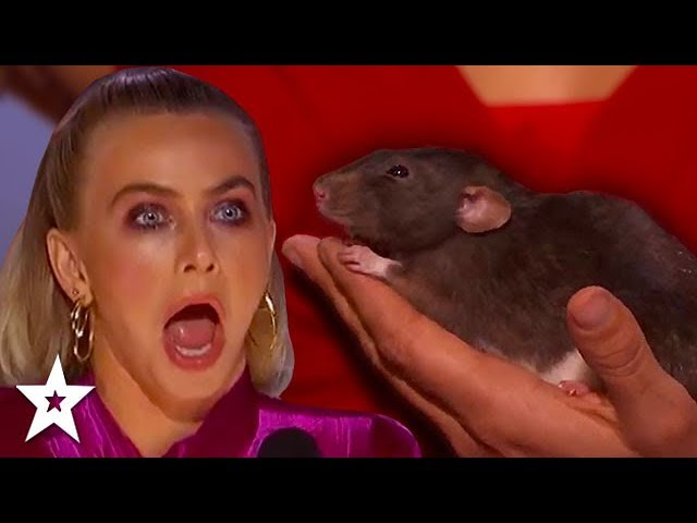 BEST And FUNNIEST Animal Auditions On Got Talent 2019! | PART 2 | Got Talent Global