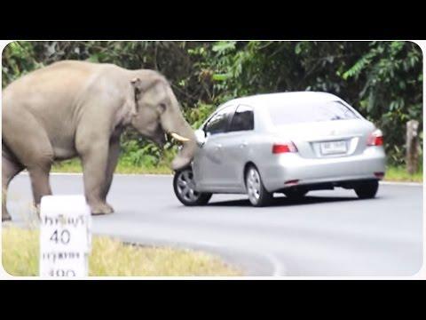 Wild Elephant Wrecks Car | Trunk Club