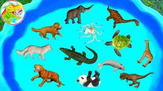 Lots of Zoo Wild Animals Learn Colors For Children With Real Safari Videos - G184P ToyTV