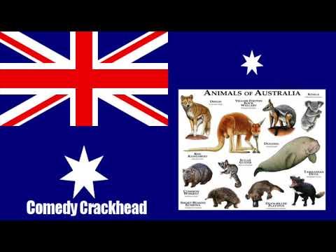 Jim Jefferies - Animals Of Australia