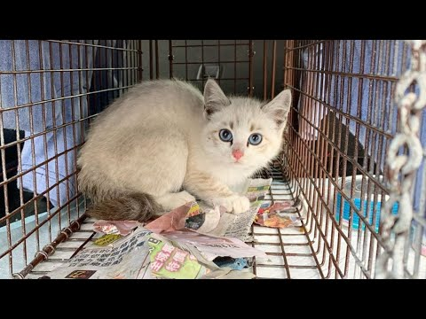 Застенчивый бездомный котёнок отказывался за 7 февраля