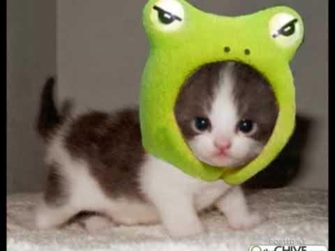 Top animaux droles et délires - YouTube DW04