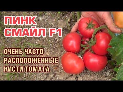 Розовый помидор ПИНК СМАЙЛ F1 самый вкусный розовый томат 👍