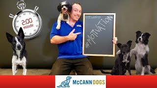How To Motivate Your Dog To Listen /2 Minute Training Terms Episode 1/