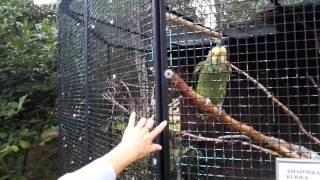 ZOO Zamość, nauka mówienia papugi