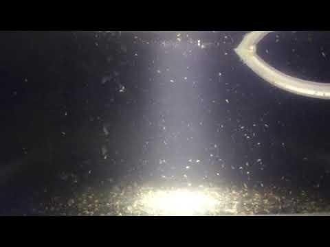 Marine Wasserflöhe von Aquacopa GmbH