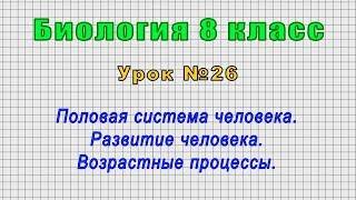 Биология 8 класс (Урок№26 - Половая система человека. Развитие человека. Возрастные процессы.)