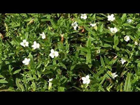 Водные растения4 Декоративные растения