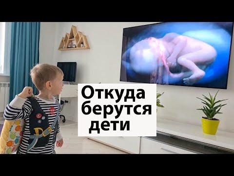 VLOG: Рассказала откуда берутся дети