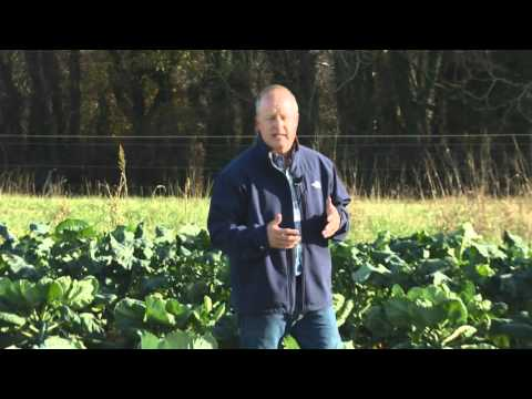 From the Ground Up - Cole Crops