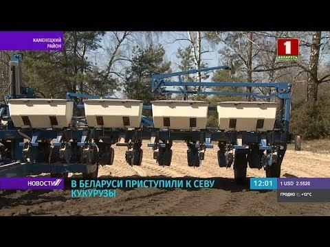 В Беларуси приступили к севу кукурузы и свеклы