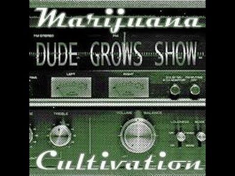 This Week in Cannabis Episode #1