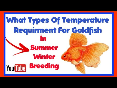 What Is The Best Suitable Temperature For Goldfish