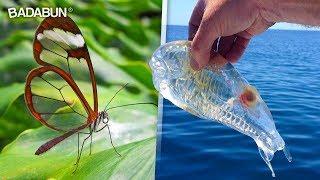 7 animales transparentes que no sabias que existian