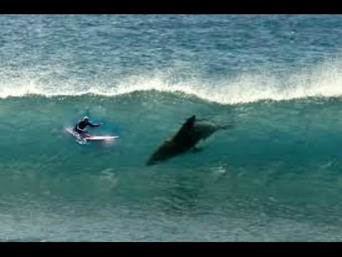 Shark Attack Stories[Shark Documentary]HD