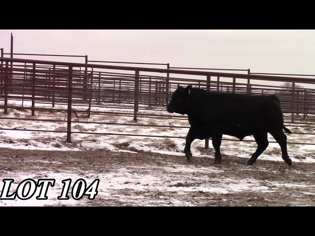 Mead Angus Farms Lot 104