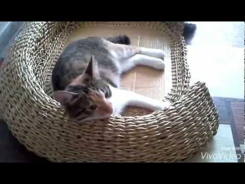 Зоомагазин доберман – купить домики для кошек недорого c доставкой по москве и россии. Большой ассортимент зоотоваров. Цены. Отзывы. Доставка от 2000руб. Бесплатно!