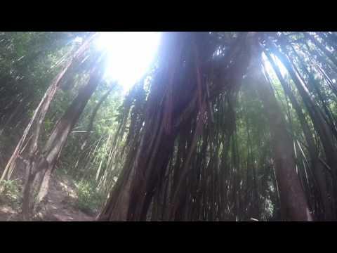 Manoa falls trail hike 2017/ hiking in Oahu Hawaii