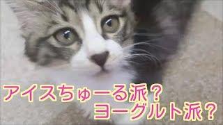 アイスちゅーる派とヨーグルト派。 どっちかな?? 横浜の関内駅から徒...