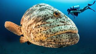 5 Самых Уникальных Рыб в Океане