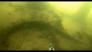 SPEARFISHING! Подводная охота на Карповке