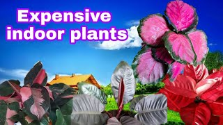 10 TRENDING EXPENSIVE HOUSE PLANTS FOR BUSINESS