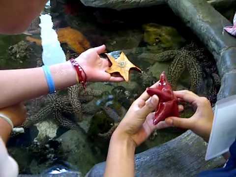 The Roundhouse Marine Studies Lab and Aquarium on Manhattan Beach rma travel