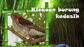 Download lagu Kicau Masteran Burung Kedasih Ngoceh Kalem