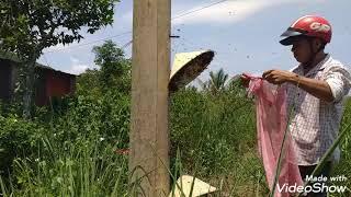 """Nhập trực tiếp hai đàn ong mật bắt trong cột điện """"săn bắt đồng nai"""""""