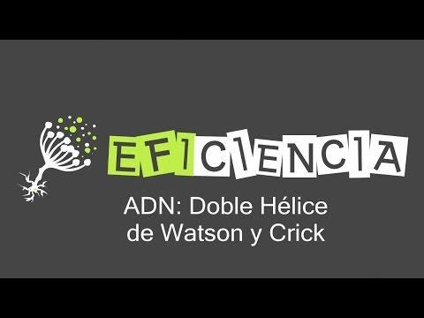 ADN. Doble Hélice de Watson y Crick