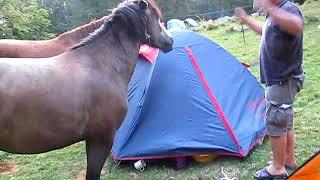2012 08 17 ВОДОПАД ШИПОТ видео общение с лошадками