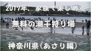 2017年04月25日に横浜市金沢区にある金沢海の公園で潮干狩りを致しまし...