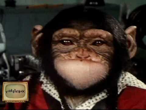 The Monkey Birthday YouTube – Funny Monkey Birthday Cards