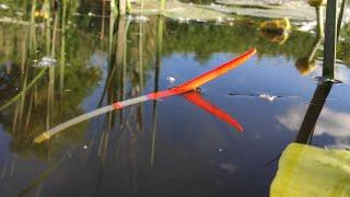 Крупняк в кувшинках выкладывает поплавок Рыбалка на карася летом