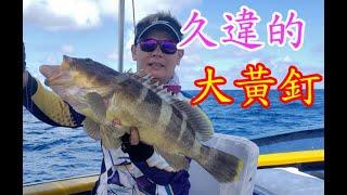 【香港釣魚】《久違的大黃釘》