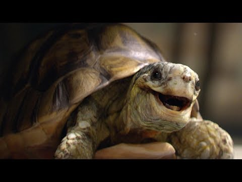Homebase: Gary the Tortoise
