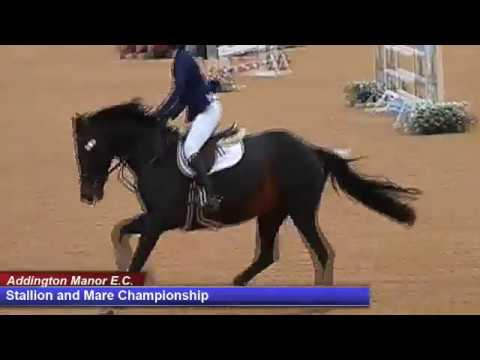 British Young Horse Showjumping Championships Stallion & Mare Champ - Saturday 19th August 2017