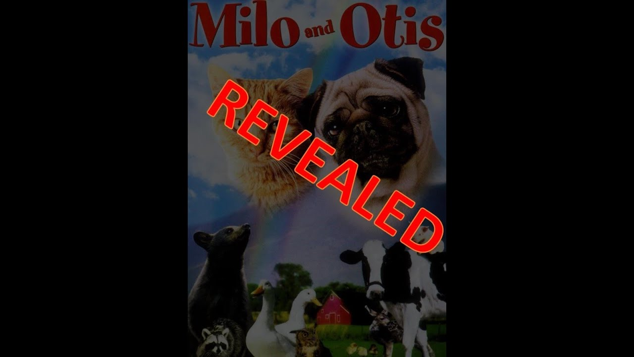 Milo And Otis True Story Revealed Youtube