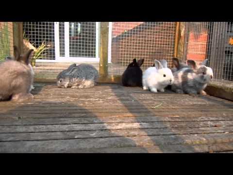 4 week old baby bunnies playing in run