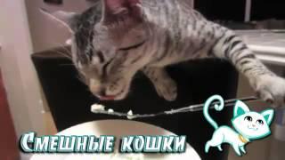 Смешное видео с кошками. Приятного аппетита.