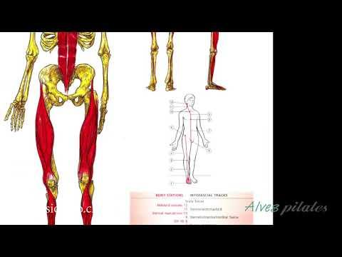 que-son-las-cadenas-musculares?