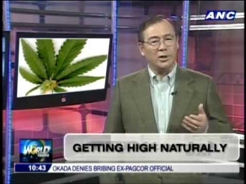 Abs-cbn news :Teditorial Marijuana Philippines (HIGHisCOOL.com)