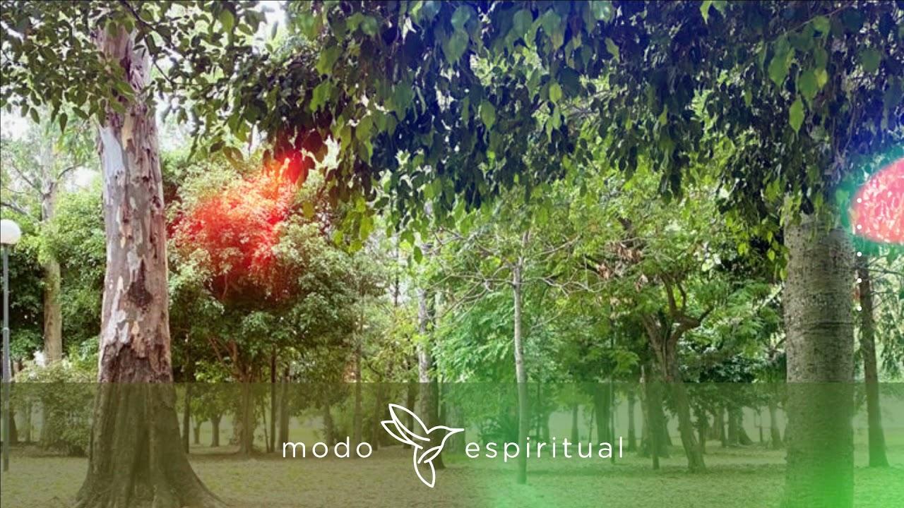 Meditación: Somos naturaleza