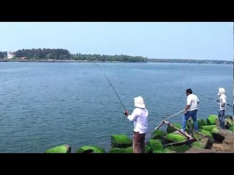 Threadfin Salmon Caught At Munambam Arabian Sea Estuary Munambam Fishing Season