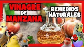 VINAGRE DE MANZANA PARA CANARIOS Y EXOTICOS    Remedios naturales  