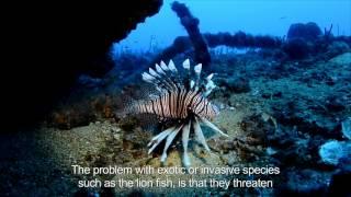 El Pez León amenaza la biodiversidad del Caribe